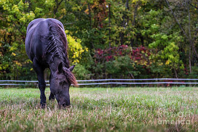 Photograph - Colorful Grazing by Joann Long