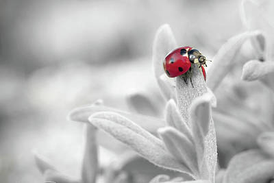 Photograph - Colorful Happy Ladybug Wall Art by Wall Art Prints