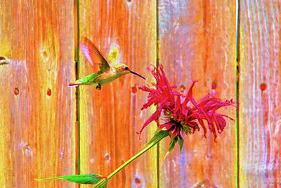 Digital Art - Colorful Hummingbird by David Stasiak