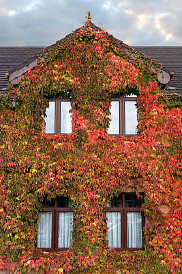 Colorful Ivy House Ireland Art Print by Pierre Leclerc Photography