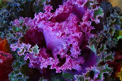 Photograph - Colorful Kale 1 by Kathryn Meyer