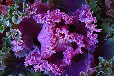 Photograph - Colorful Kale 3 by Kathryn Meyer