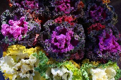 Photograph - Colorful Kale 4 by Kathryn Meyer