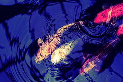 Photograph - Colorful Koi by Scott Hill