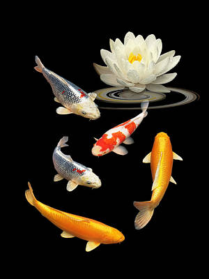 Photograph - Colorful Koi With Water Lily by Gill Billington