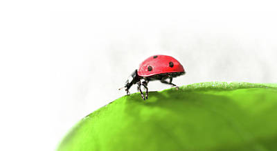 Photograph - Colorful Ladybug On Green Leaf Art by Wall Art Prints