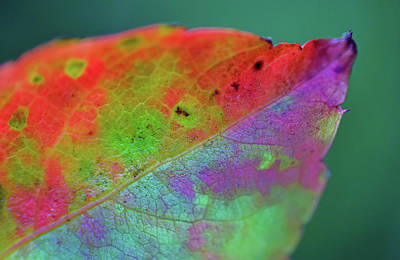 Photograph - Colorful Leaf by Larah McElroy