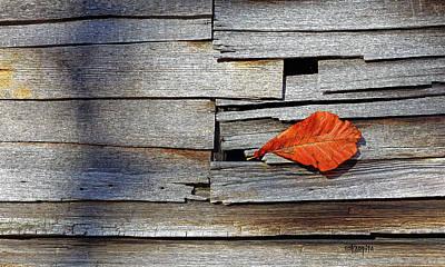 Photograph - Colorful Leaf On Old Barn Wood by Rebecca Korpita