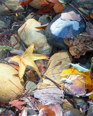 Photograph - Colorful Leaves And Rocks In Creek by Carol Groenen