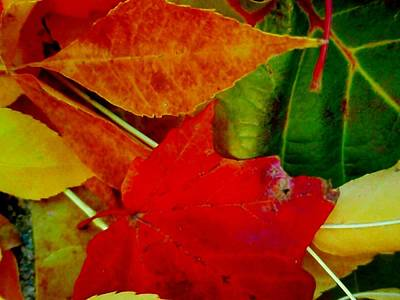 Photograph - Colorful Leaves by Beth Akerman