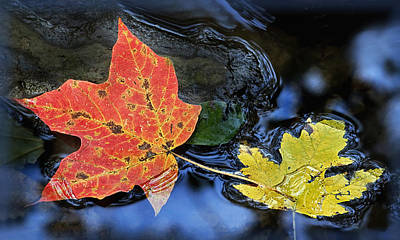 Photograph - Colorful Leaves In The Creek by Carolyn Derstine