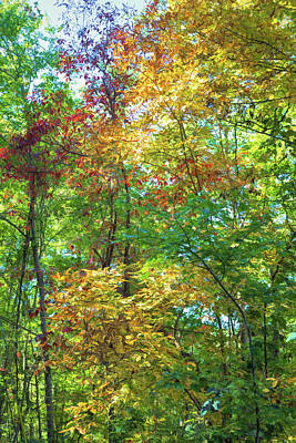 Photograph - Colorful Leaves by John M Bailey