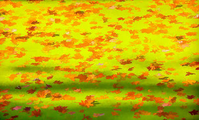 Colorful Leaves On Canal Art Print by David Letts