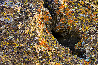 Photograph - Colorful Lichens by Albert Seger
