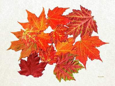 Maple Leaf Art Mixed Media - Colorful Maple Leaves by Christina Rollo