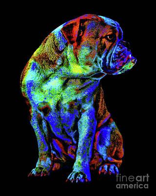 Digital Art - Colorful Max by Olga Hamilton