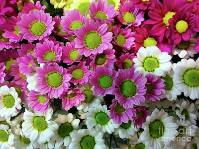 Photograph - Colorful Mums by Jasna Dragun