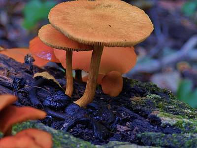 Colorful Mushrooms Art Print by Robert Ulmer