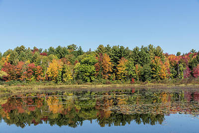 Photograph - Colorful Muskoka Lake Symmetry by Georgia Mizuleva