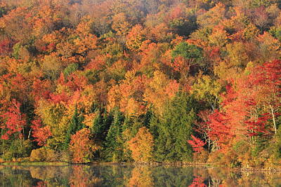 Photograph - Colorful New England Fall Foliage by John Burk