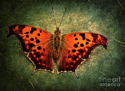 Jeffery Johnson Photograph - Colorful Orange Butterfly by Photo Captures by Jeffery
