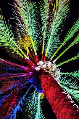Photograph - Colorful Palm by April Reppucci