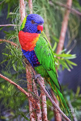 Photograph - Colorful Parakeet by Stephanie Hayes