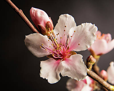 Colorful Peach Blooms 5535.02 Art Print by M K  Miller