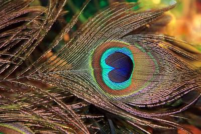 Photograph - Colorful Peacock Feather by Angela Murdock
