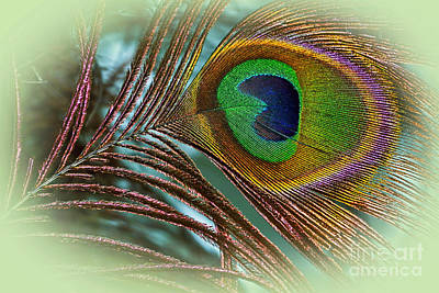 Photograph - Colorful Peacock Feather by Kaye Menner