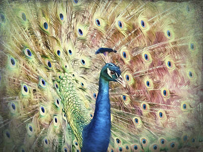 Photograph - Colorful Peacock by Storm Smith