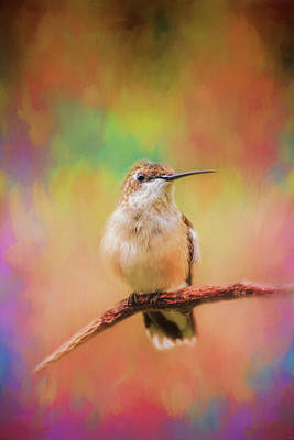 Photograph - Colorful Personality Hummingbird Art by Jai Johnson