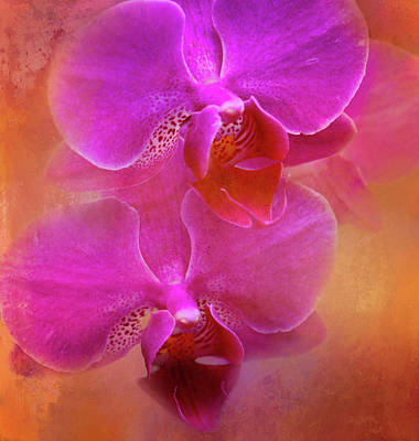 Photograph - Colorful Phalaenopsis by HH Photography of Florida