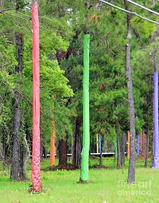 Photograph - Colorful Pine Trees by D Hackett