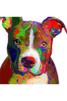 Painting - Colorful Pit Bull Terrier  by Samuel Majcen
