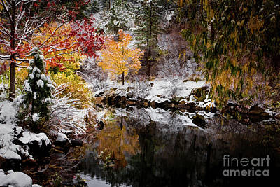 Photograph - Colorful Pond by Jon Burch Photography