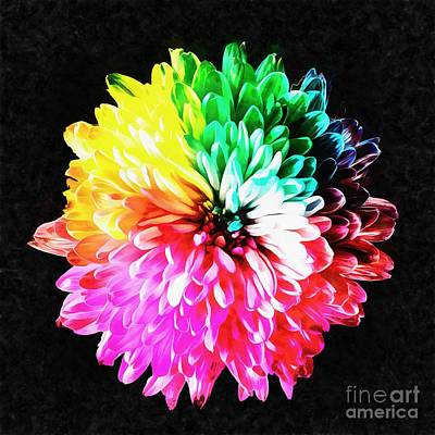 Painting - Colorful Rainbow Flower by Edward Fielding