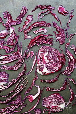 Photograph - Colorful Red Cabbage by Nicholas Burningham