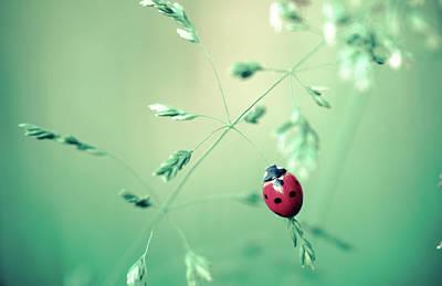 Photograph - Colorful Red Ladybug Art Prints by Wall Art Prints