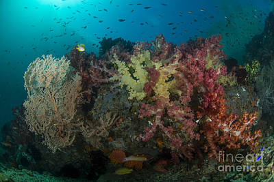 Food And Flowers Still Life - Colorful Reef With Gorgonian Sea Fan by Mathieu Meur