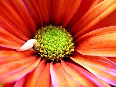 Photograph - Colorful by Rhonda Barrett