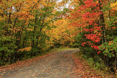 Photograph - Colorful Road by Jane Luxton