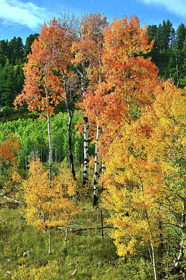 Photograph - Colorful Roadside Aspens On The Way To Telluride by Ray Mathis