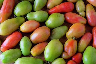 Photograph - Colorful Roma Tomatoes by James BO Insogna