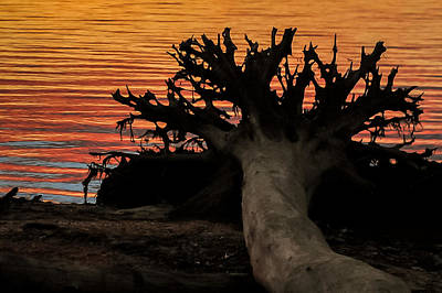 Photograph - Colorful Roots by Terry DeLuco