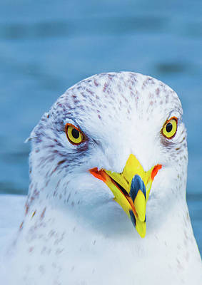 Photograph - Colorful Seagull Smiling by Jeff at JSJ Photography