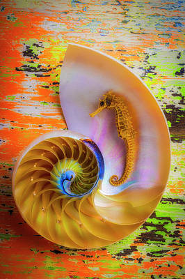 Photograph - Colorful Seahorse And Nautilus Shell by Garry Gay