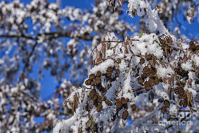 Photograph - Colorful Snowy Tree With Blue Sky  by Patricia Hofmeester