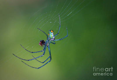 Photograph - Colorful Spider In Web by Tom Claud