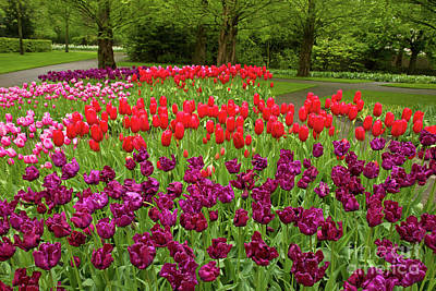 Photograph - Colorful Spring Flowerbeds by Anastasy Yarmolovich
